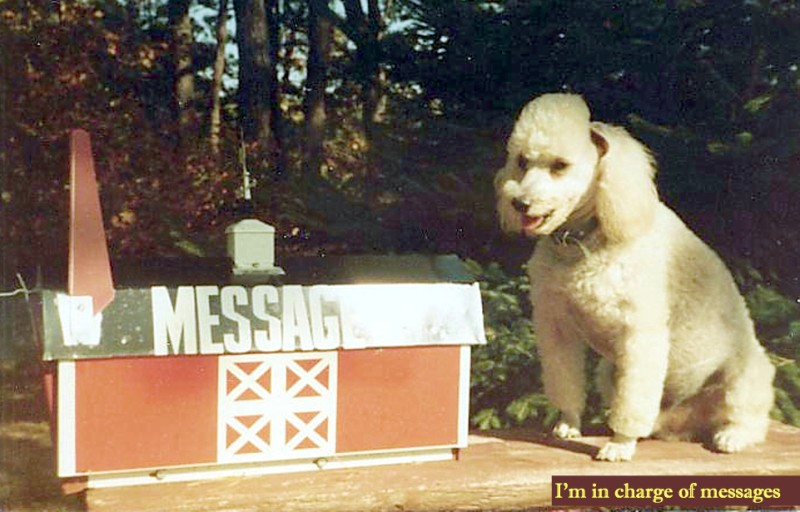 Dog with mailbox